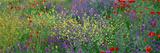 Wildflowers El Escorial Spain
