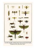 Crane Flies, Dragonflies, Caddis Flies, Wasp, Predaceous Diving Beetles, Mayflies, etc.