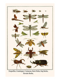 Dragonflies, Grasshopper, Crustacean, Hawk Moths, Stag Beetles, Hercules Beetles,