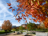 University of Cincinnati - Fall Scene
