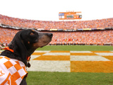 University of Tennessee - Tennessee's Smokey at Neyland Stadium