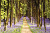 Buy Woodland Path at AllPosters.com