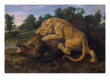 A Lioness Attacking a Wild Boar