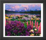 Iris and Lupine Garden and Teton Range at Oxbow Bend, Wyoming, USA,