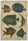 Buy Goldsmith's Spinous Fishes at AllPosters.com
