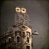 An Owl on a Roof in the City