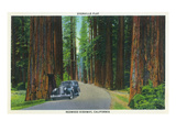 Buy California - Dyerville Flat Scene on the Redwood Highway at AllPosters.com