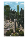 Riverside, California - White's Park View of Cactus Garden