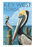 Key West, Florida - Brown Pelican