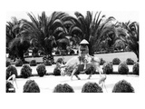 Hollywood, California - Bernheimer Residence, Man on Water Buffalo Photo