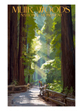 Muir Woods National Monument, California - Pathway Art Print