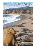 Piedras Blancas Elephant Seal Rookery - California