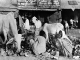 Calcutta Scene at the Peak of India's Famine in Late October 1943