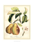 Tuscan Fruits IV Giclee Print
