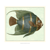 Buy Angel Fish I at AllPosters.com