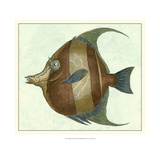 Buy Angel Fish II at AllPosters.com