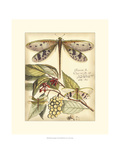 Whimsical Dragonflies I Giclee Print