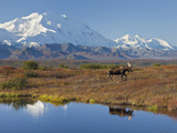Mt. Mckinley, Denali National Park, Alaska, USA