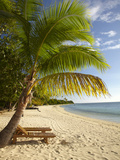 Beach and Palm Trees, Plantation Island Resort, Malolo Lailai Island, Mamanuca Islands, Fiji