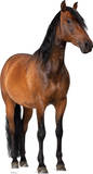 Horse Lifesize Standup Poster Stand Up