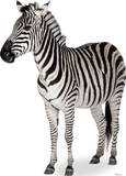 Zebra Lifesize Standup Stand Up