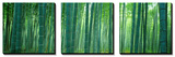 Bamboo Forest, Sagano, Kyoto, Japan Canvas Art Set