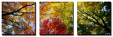 Buy Colorful Trees in Fall, Autumn, Low Angle View at AllPosters.com