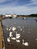 Swans and Ducks on the River Deben at Woodbridge Riverside, Woodbridge, Suffolk, England, UK