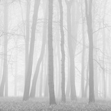 Buy Morning Mists II at AllPosters.com