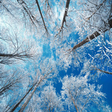 Frozen Sky Photographic Print