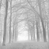 Buy Morning Mists Iv at AllPosters.com