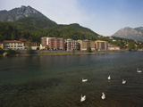 Buy Swans in the Lake with Town in the Background, Lecco, Lake Como, Lakes Region, Lombardy, Italy at AllPosters.com