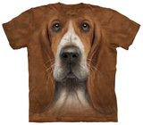 Basset Hound Head