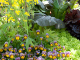 A Mixed Species Garden Patch with Pansies, Lettuce and Other Plants