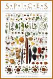 Spices and Culinary Herbs Art Print