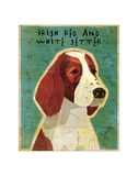 Irish Setter (Red & White)