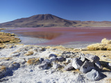 Laguna Colorada on the Altiplano, Potosi Department, Bolivia