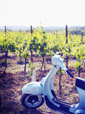Italy, Umbria, Perugia District, Montefalco, Vespa Scooter in Vineyard