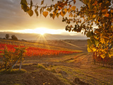 Italy, Umbria, Perugia District, Autumnal Vineyards Near Montefalco