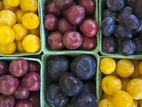 Various Varieties of Plums in Cardboard Punnets