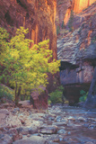Virgin Narrows Nook, Zion