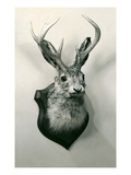 Stuffed Jackalope
