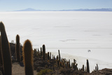 People Walking on Salar de Uyuni from Isla del Pescado (Fish Island), Potosi Department, Bolivia