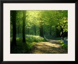 Track Leading Through Lanhydrock Beech Woodland with Bluebells in Spring, Cornwall, UK Framed Art Print