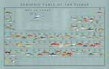 Periodic Table of the Fishes Educational Food Poster
