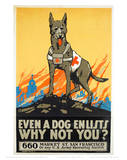 Dog Enlists