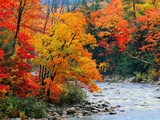 Buy Stream in Autumn Woods at AllPosters.com