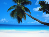 Buy Beach and Palm, Seychelles Island at AllPosters.com