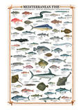 Buy Mediterranean Fish at AllPosters.com