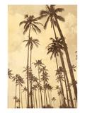 Palm Vista V